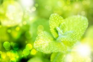 オーガニック植物成分の説明